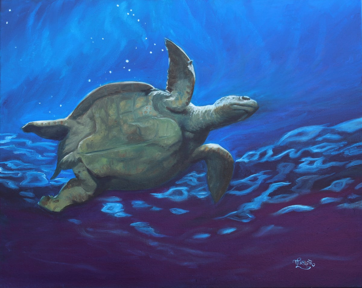 Turtle Study by Tammy Taylor