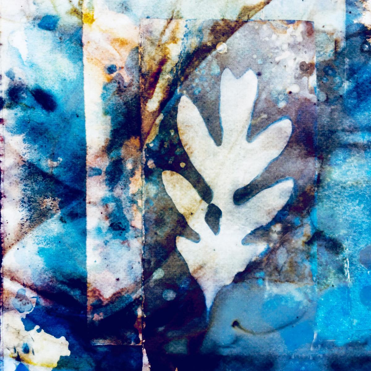 Collaged Oak