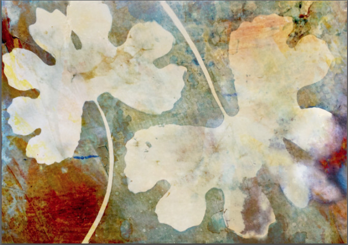 Bloodroot by Lesley Riley