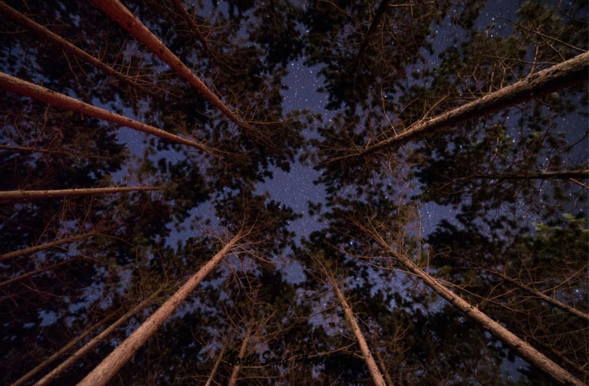 Night Sky Pines (unframed print)