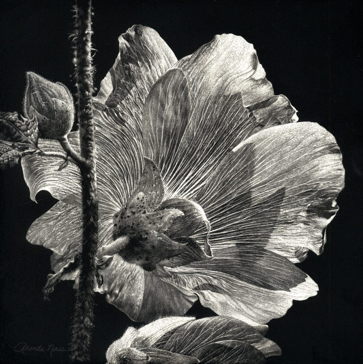 Another Perspective: Hibiscus (Original) by Rhonda Nass