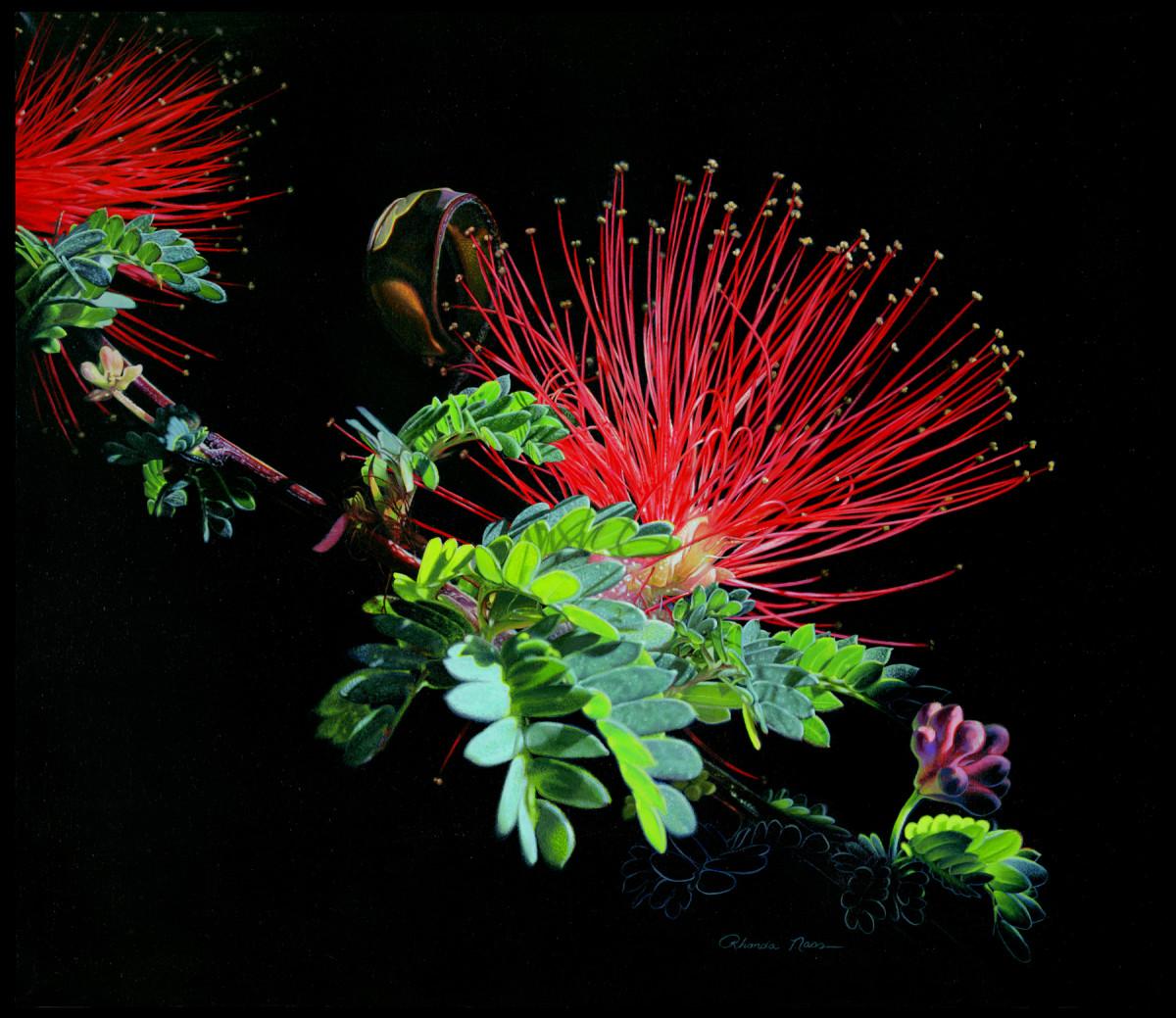 Mimosa Fireworks (Unframed print)