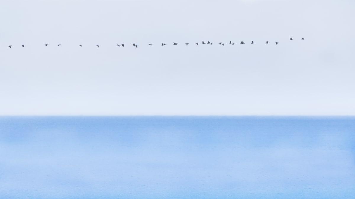 Migration (Framed photograph) by Bob Leggett