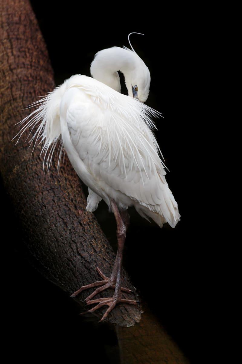 White Heron (Framed Photo) by Bob Leggett