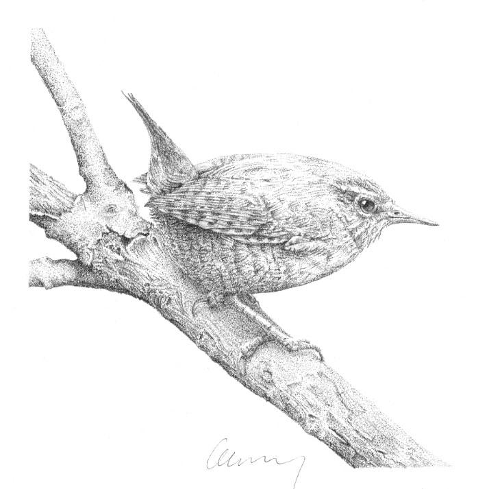 Garden Birds 1 Wren by Gary Wilcockson