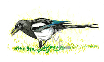 Magpie by Anne KM Ross