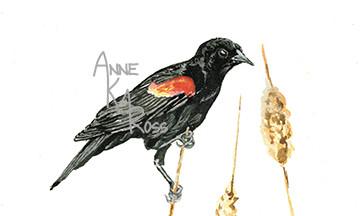 Red Winged Black Bird by Anne KM Ross