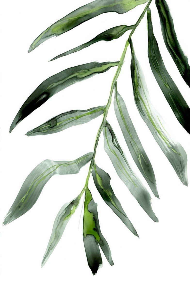 Palm Frond by Brazen Edwards