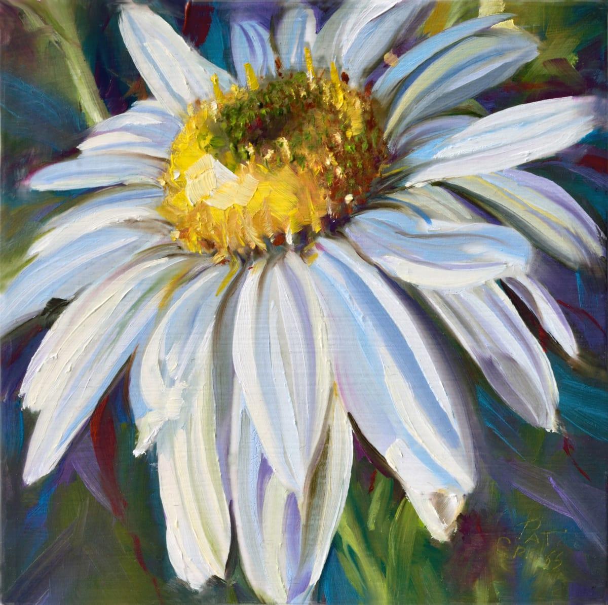 Crisp White Daisy by Pat Cross