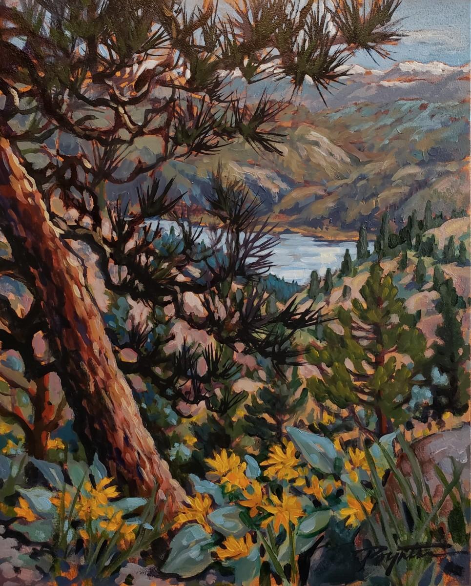 Osooyos - Ravine pine by Jan Poynter