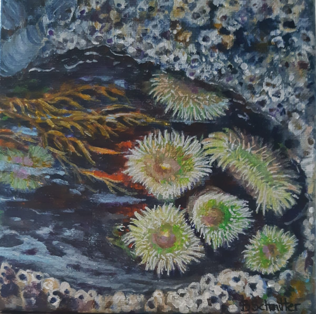 Tidal Pool by Bonnie Schnitter