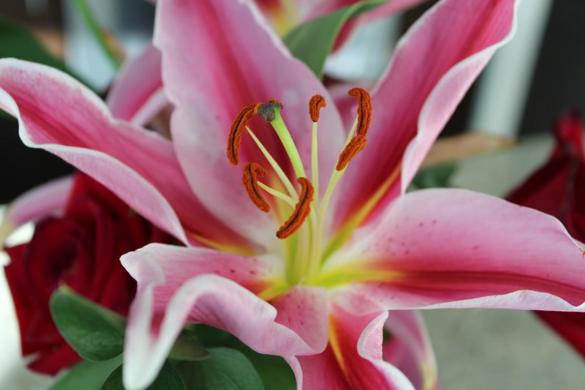 Pink Birthday Blossom