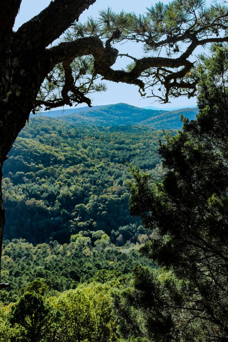 Hidden Valley by Y. Hope Osborn