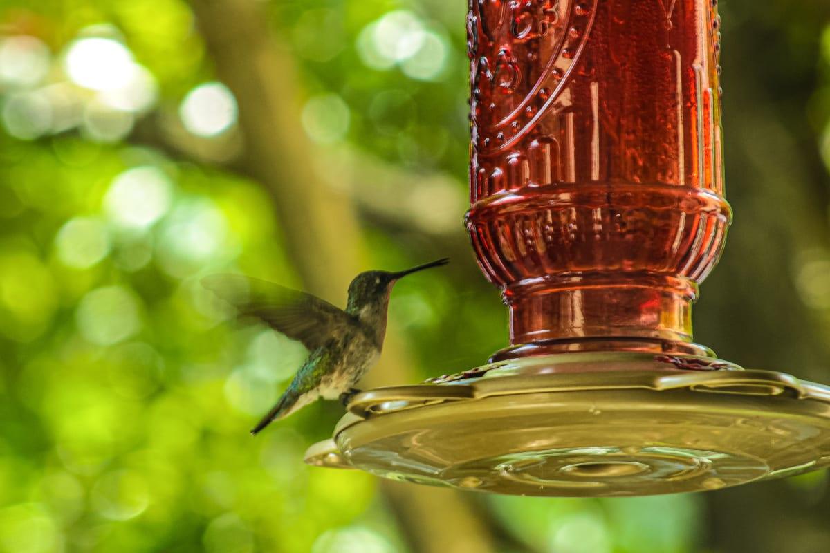 Whisper of Wings by Y. Hope Osborn