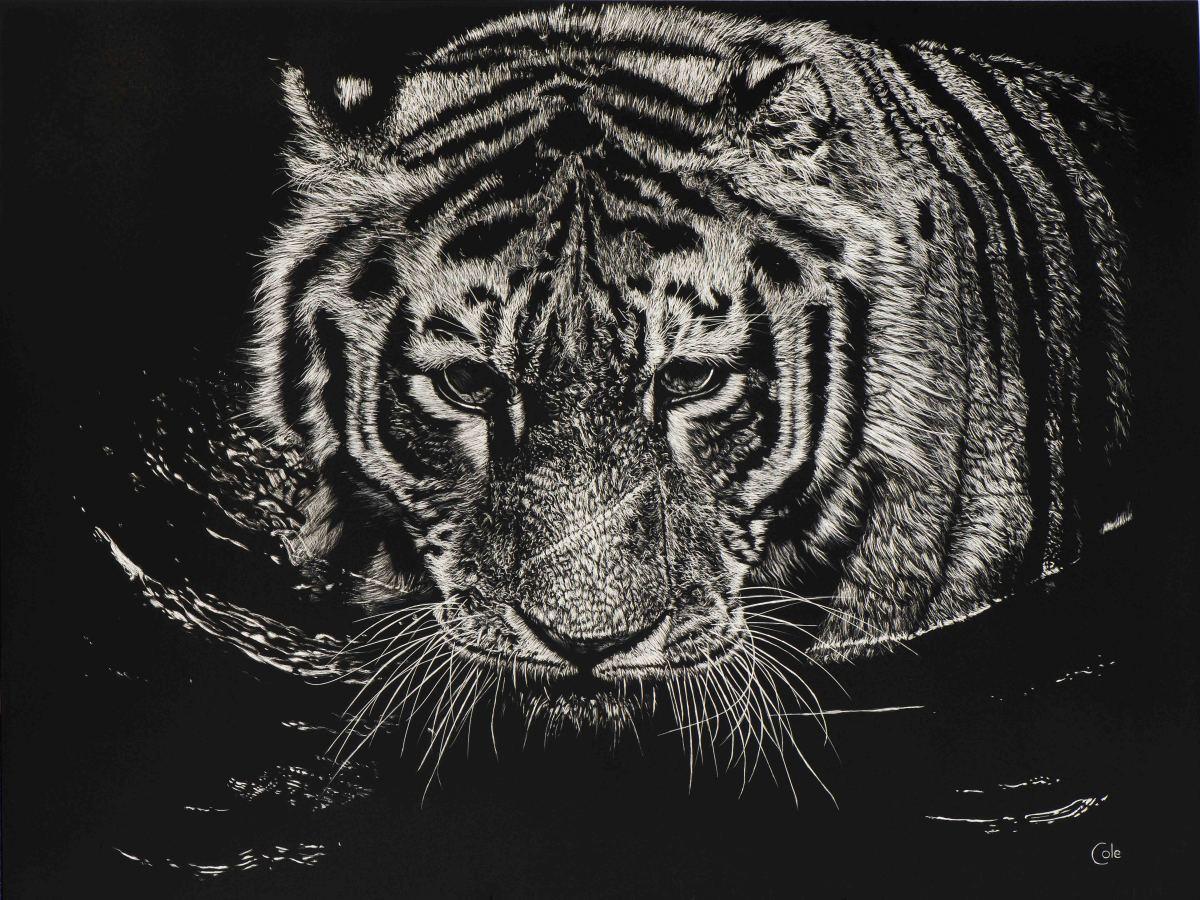 The Tiger Swims at Night