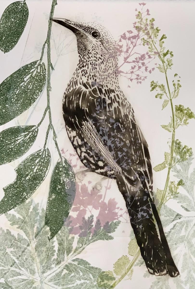 Mother wattlebird and pink jip