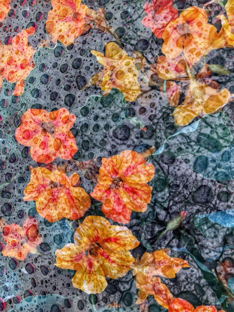 Hallucinations Flowers in the Rain by Bonnie Levinson