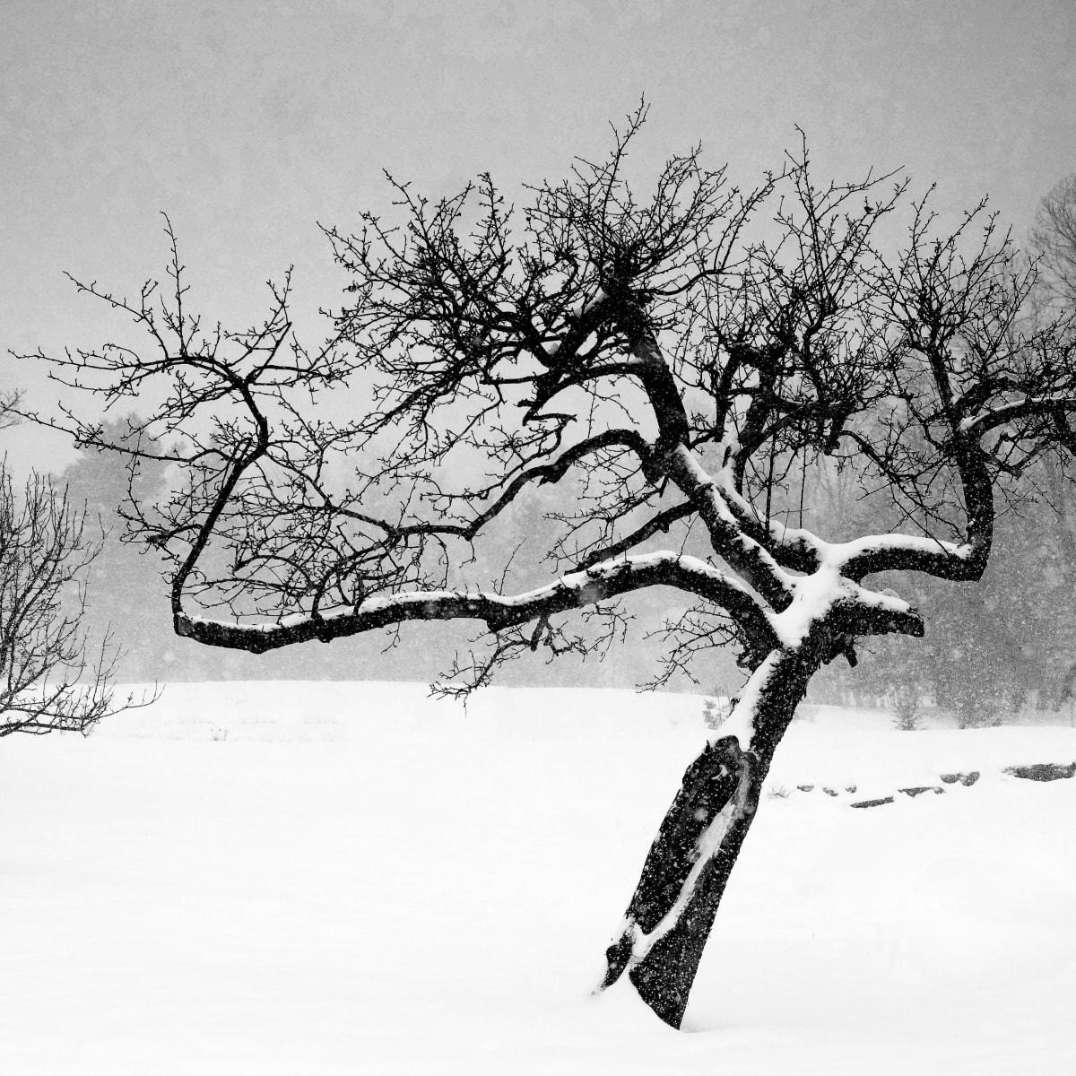 winter crone by Kelly Sinclair