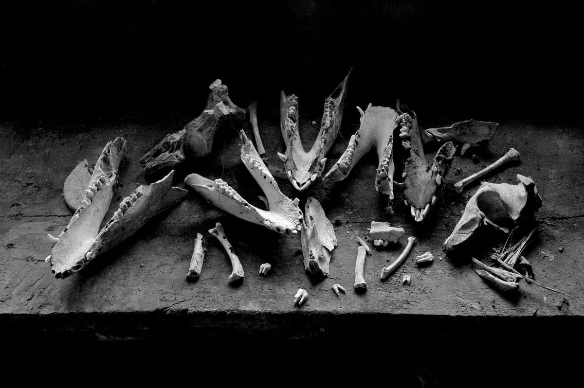 Bones by Kelly Sinclair