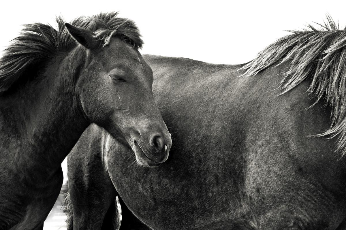 Dreaming Ponies by Kelly Sinclair