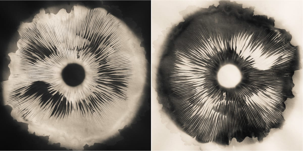 Spore print carbon copy by Kelly Sinclair