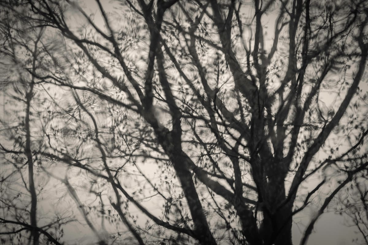 tree dreams by Kelly Sinclair