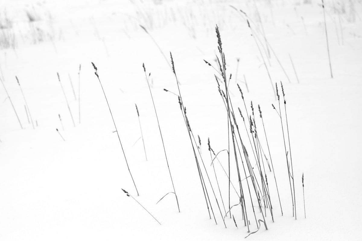 winter weeds by Kelly Sinclair