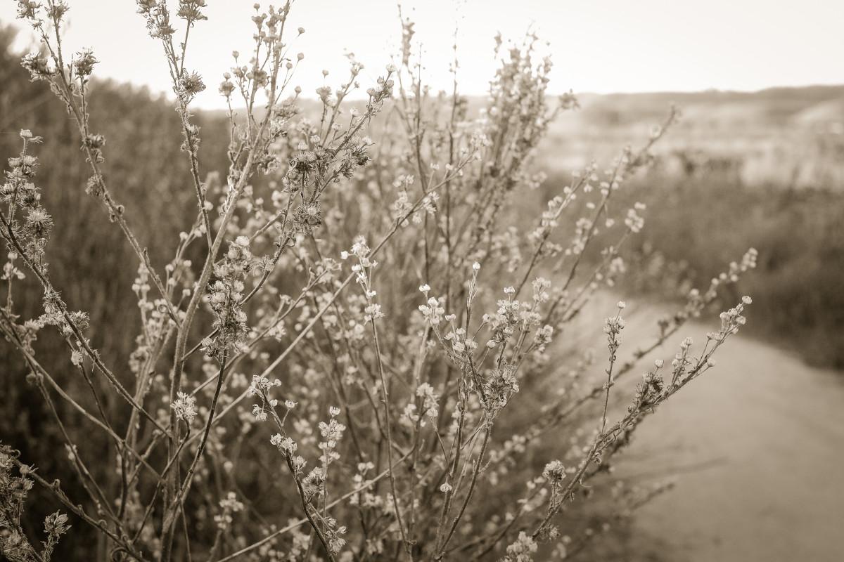wildflowers II by Kelly Sinclair