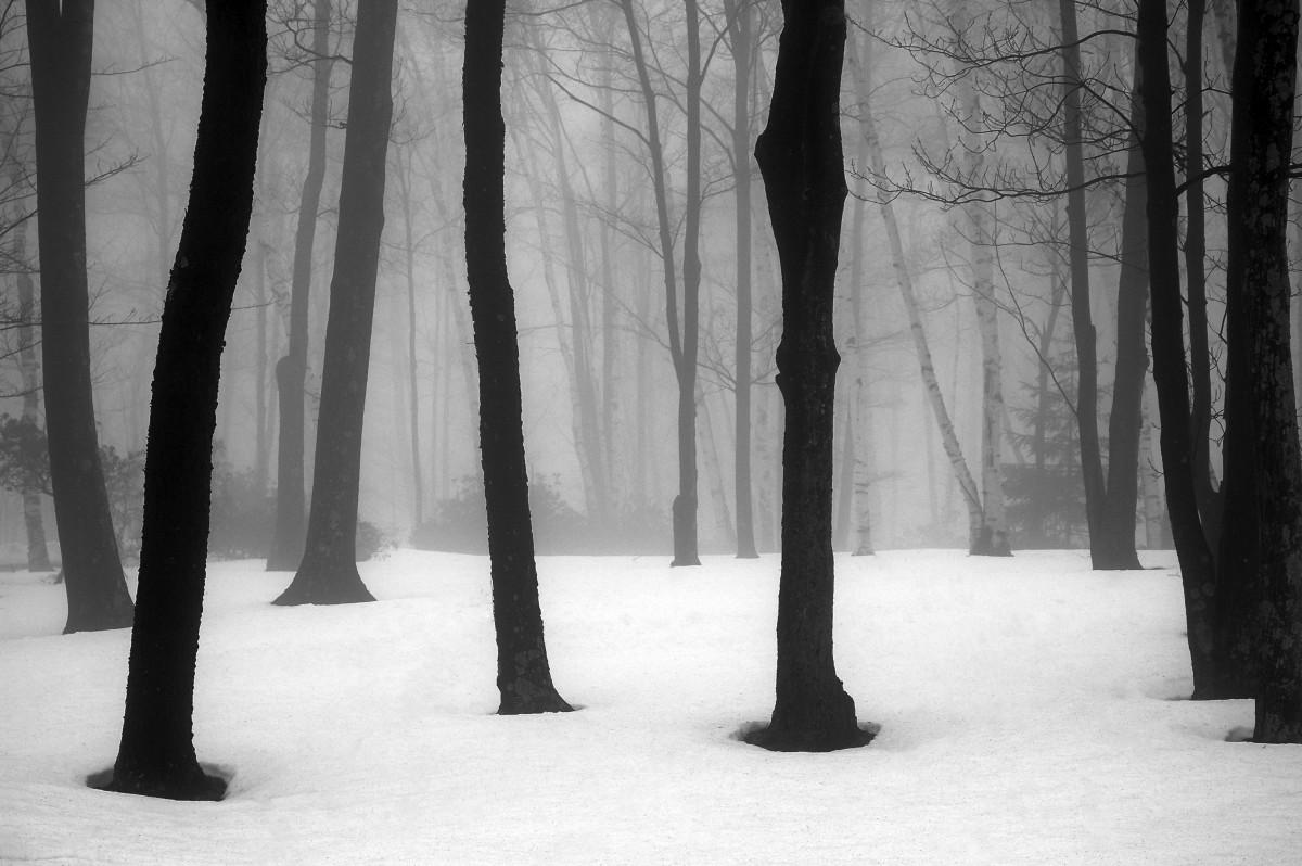 Winter Fog by Kelly Sinclair