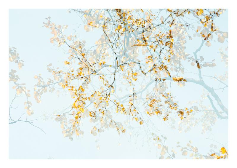 Arborescence 2  FRA039