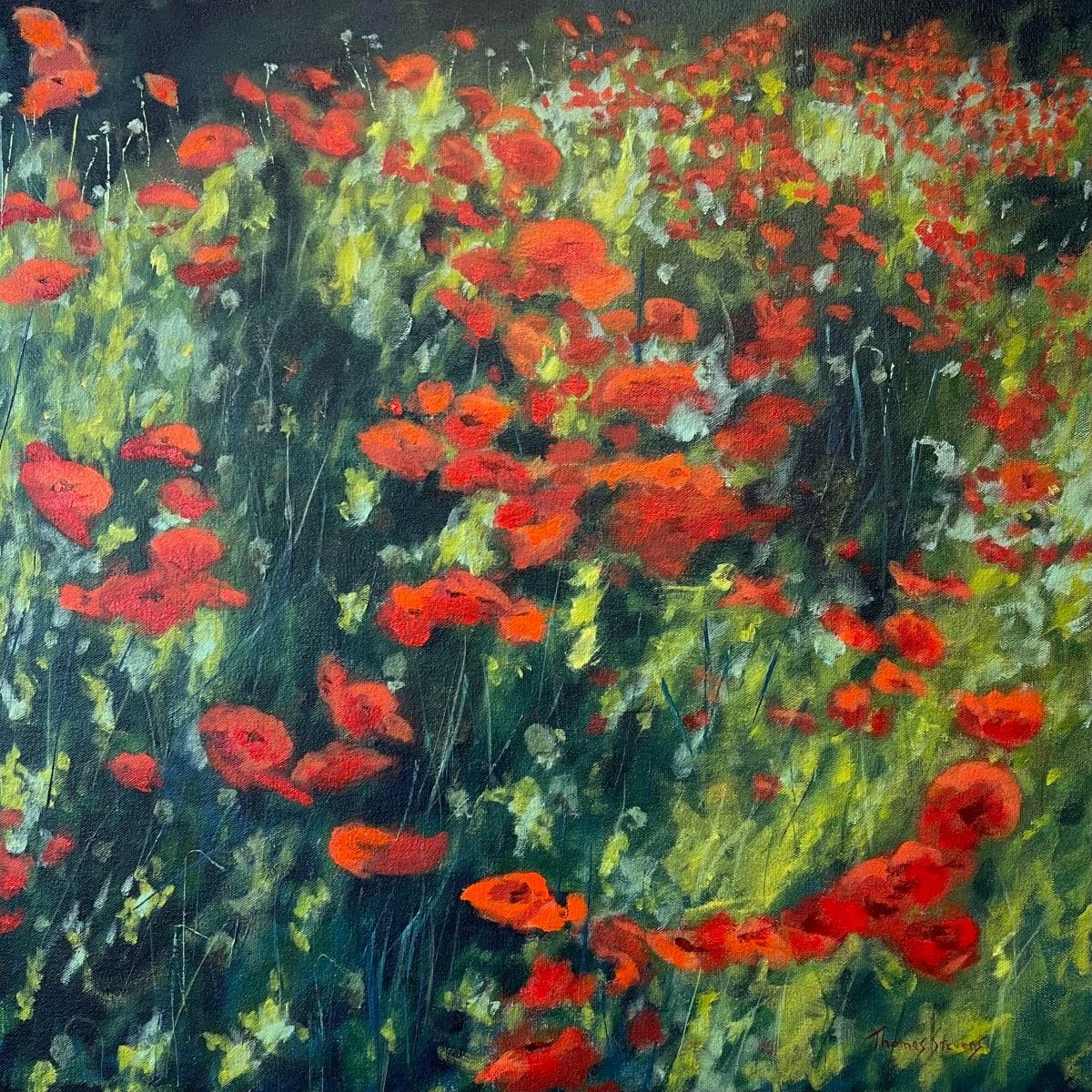 Poppies on King II  36.07546N 79.10113W by Thomas Stevens
