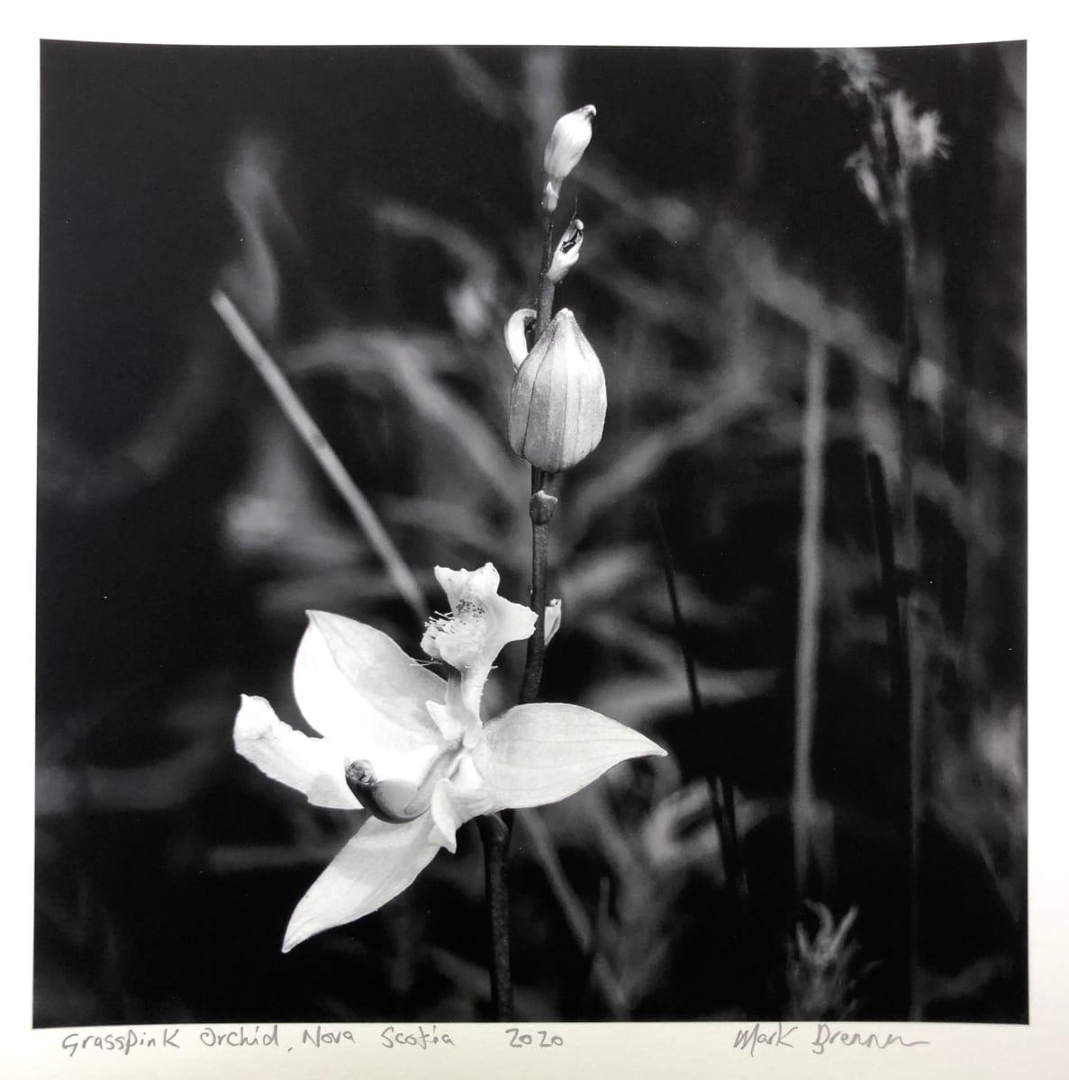 Grasspink Orchid, Nova Scotia by Mark Brennan