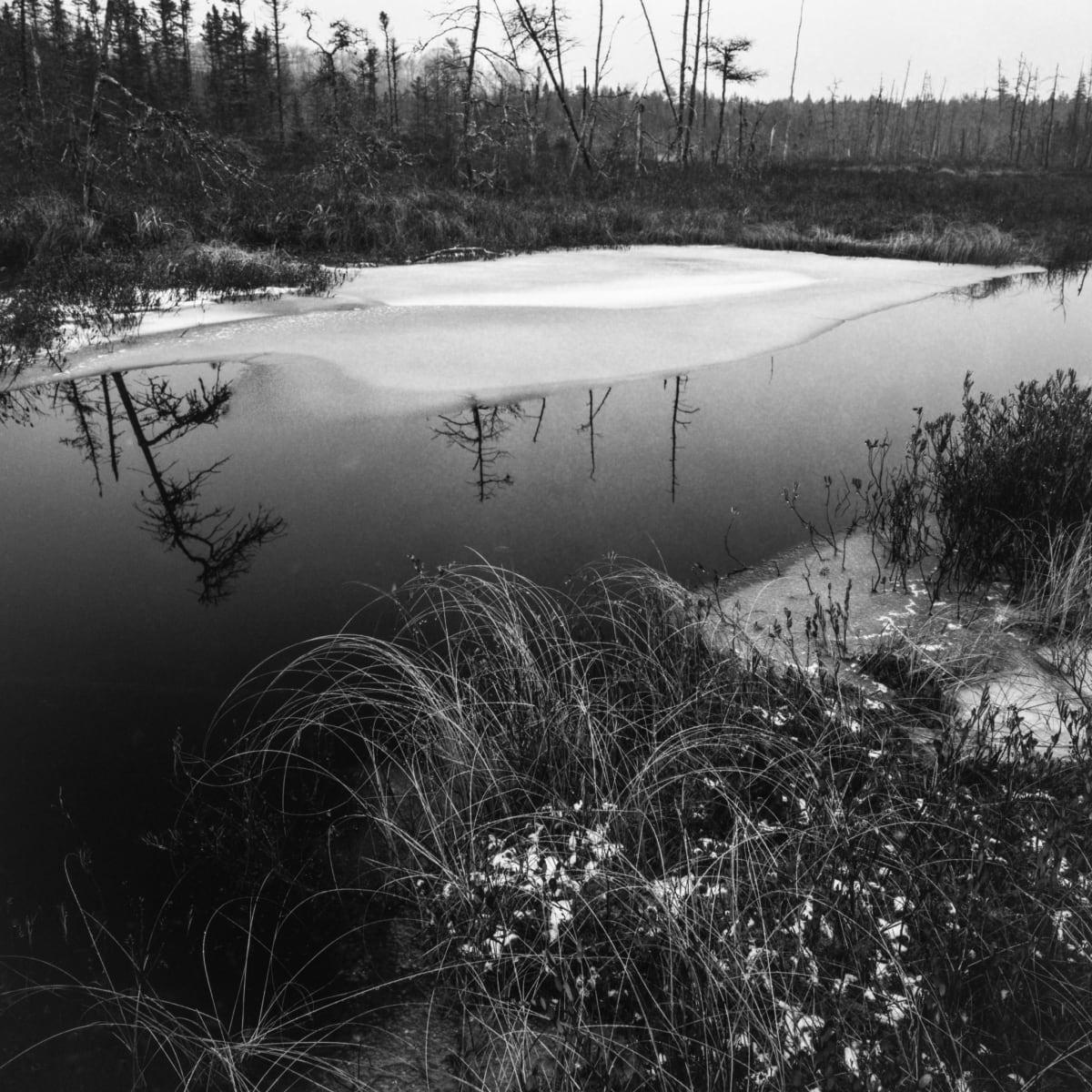 Boreal Fen, Castley Pools, Nova Scotia by Mark Brennan