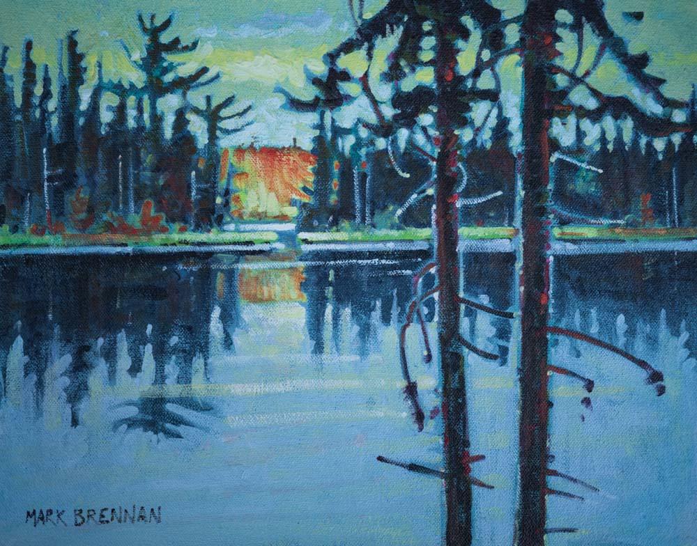 Black Spruce On The Liscomb, Nova Scotia