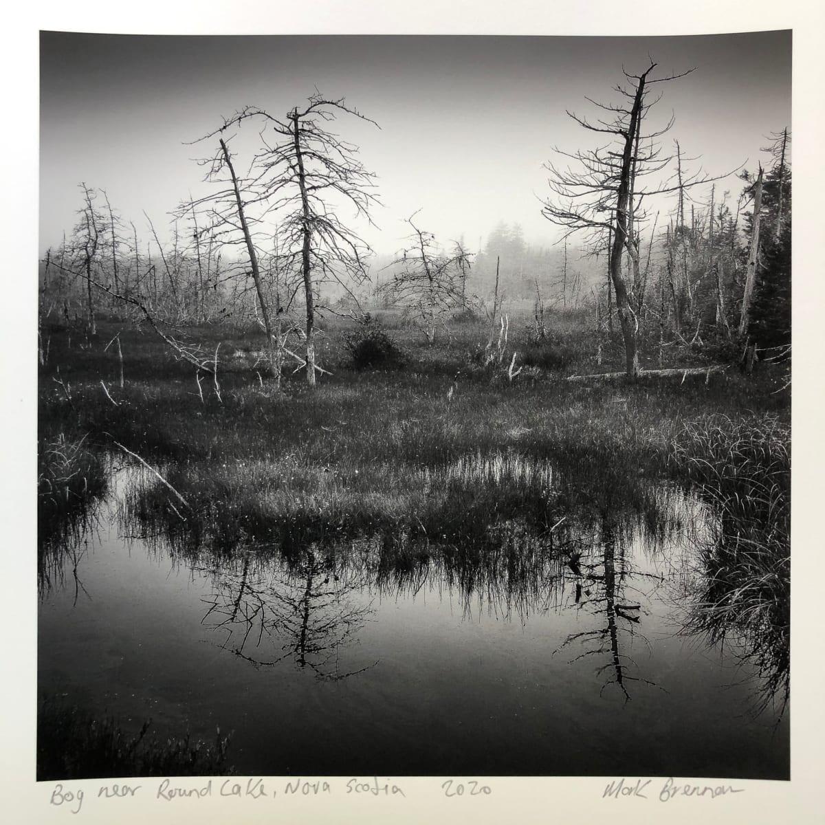 Bog Near Round Lake, Nova Scotia by Mark Brennan