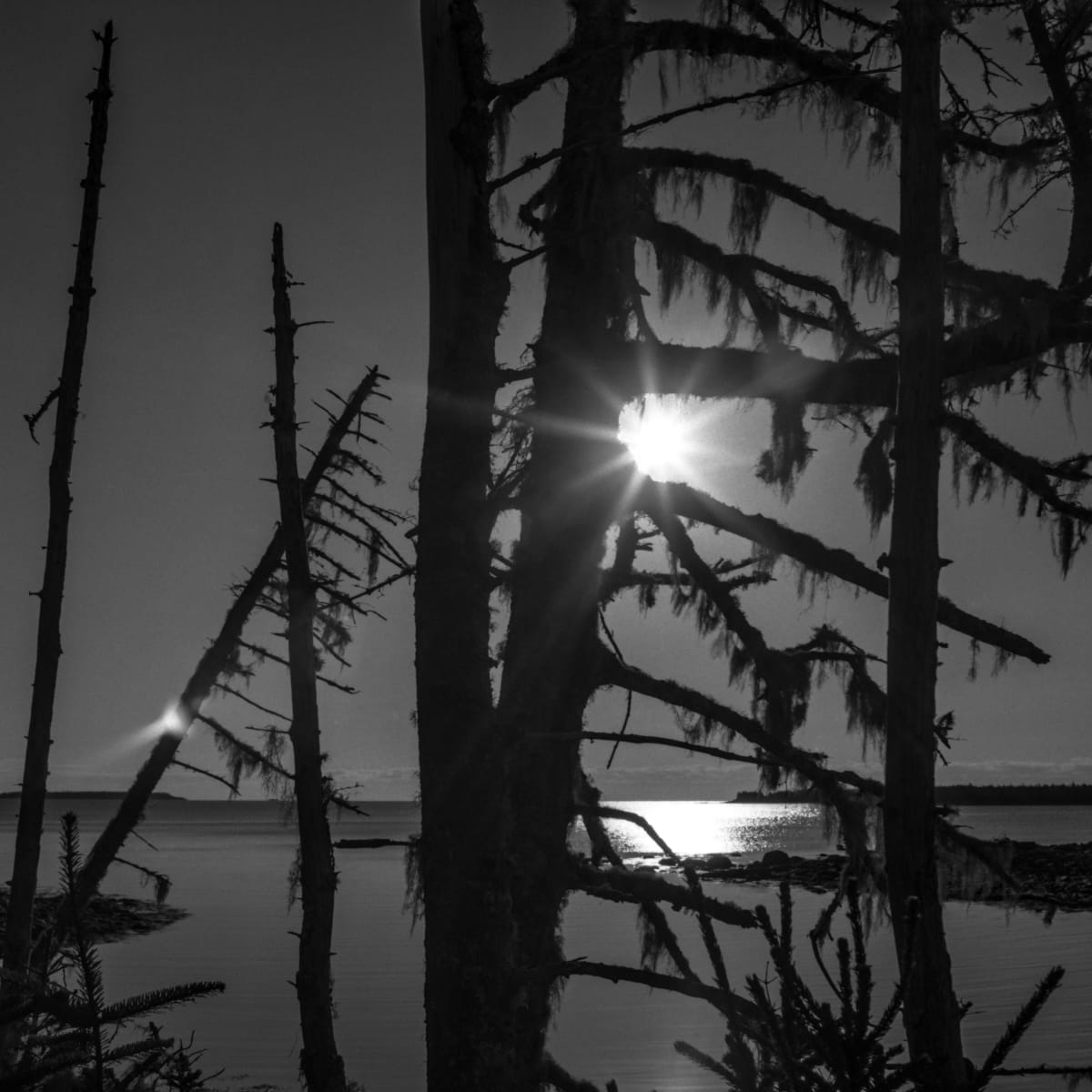Sunburst, Taylor Head, Nova Scotia