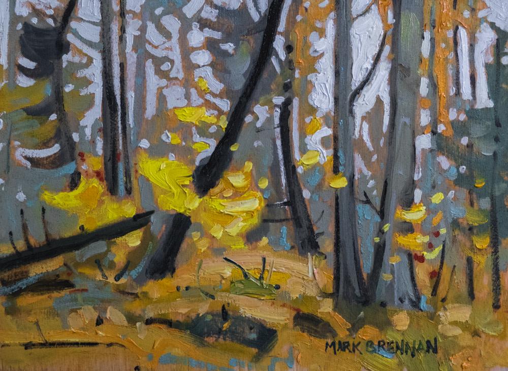 Misty Morning, October, Killarney Provincial Park, Northern Ontario by Mark Brennan