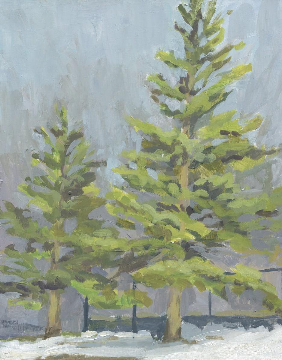 Evergreen Trees Plein Air