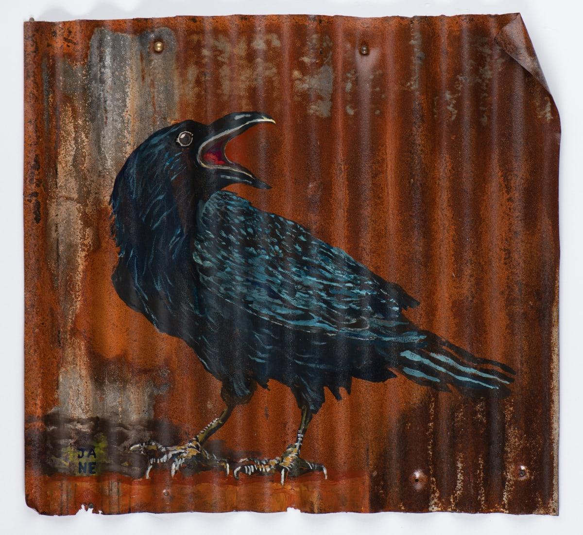 Animals Matter: Raven