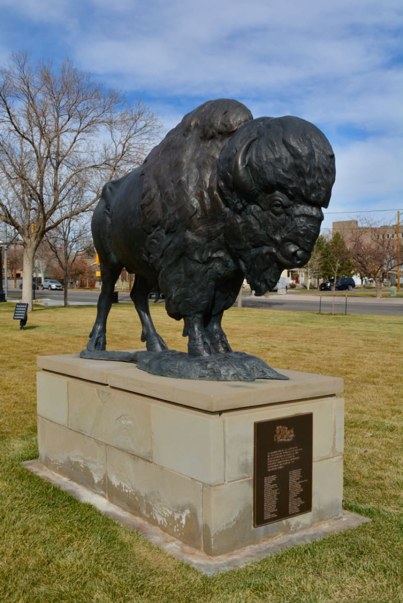 Bison by Dan Ostermiller