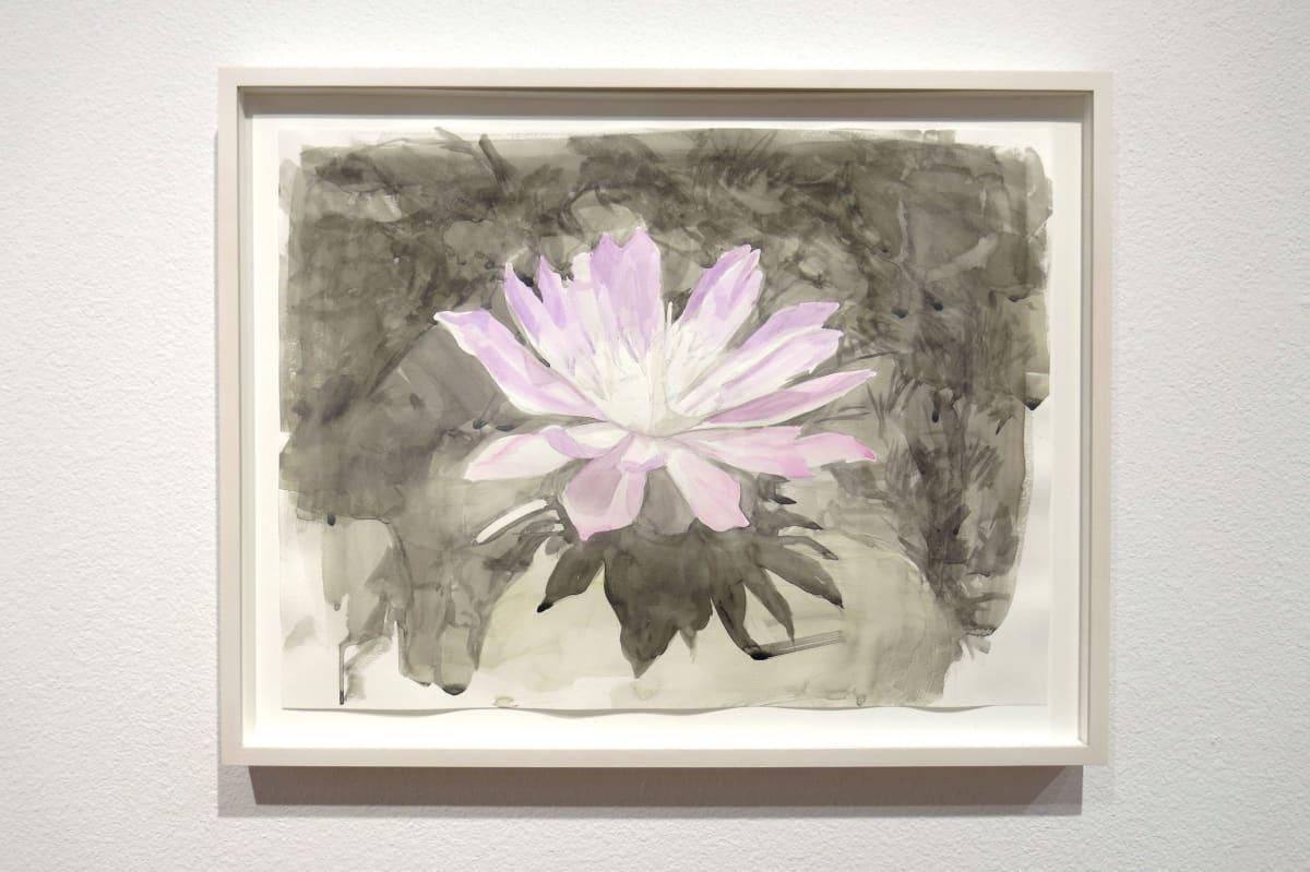 Lewisia as Lotus by Eric LoPresti