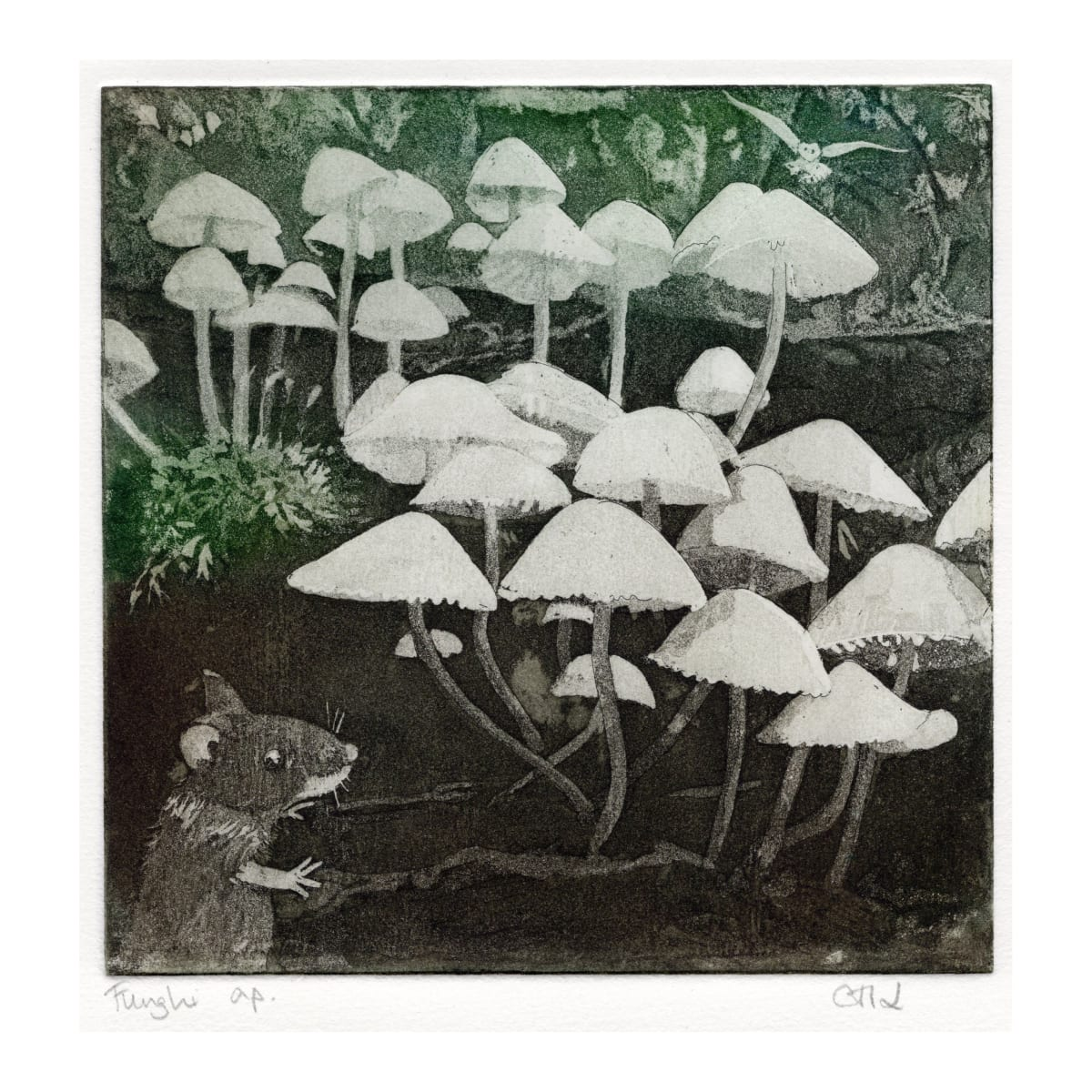 LON177, Funghi, a/p by Claire Longley
