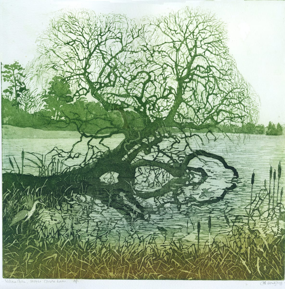 LON181, Willow on Lake at Hever Castle by Claire Longley