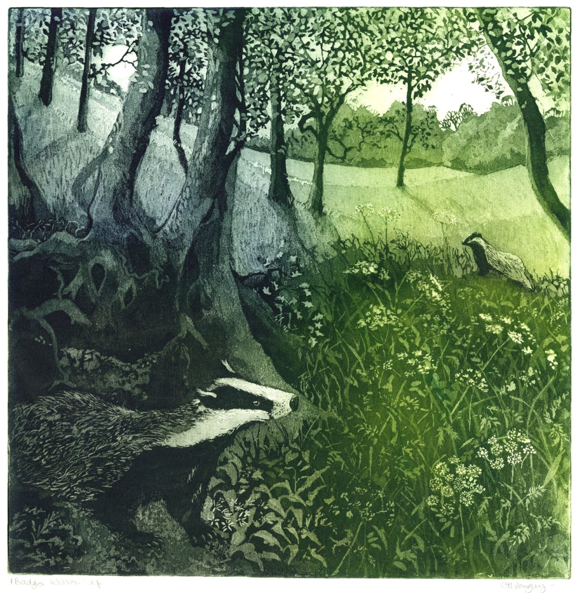 LON302, Badger Watch by Claire Longley