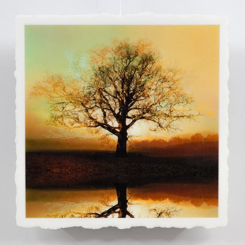 WEL079, Symmetree Reflected Rising Sun Umber Square by Mark Welland