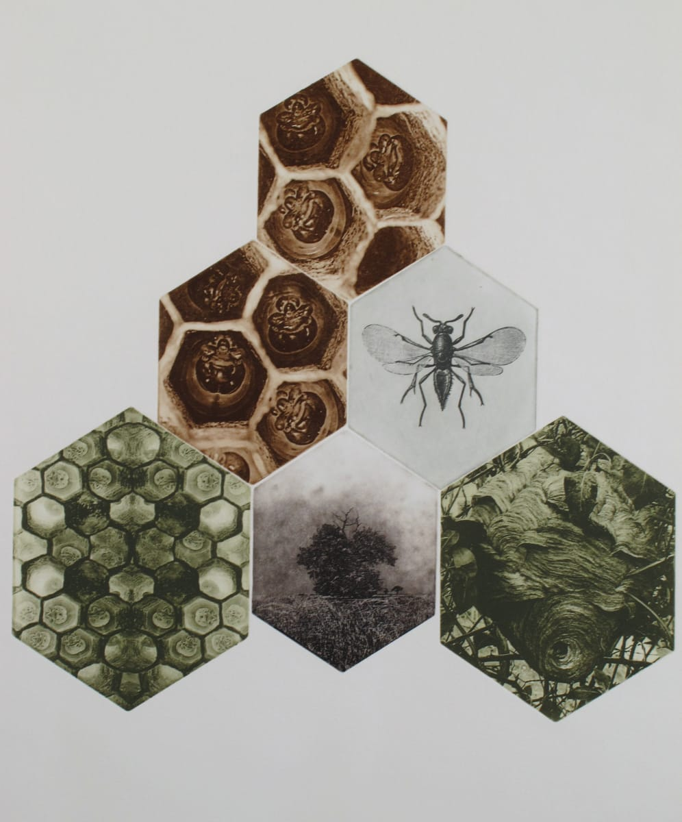 Hive by Bonnie Baker