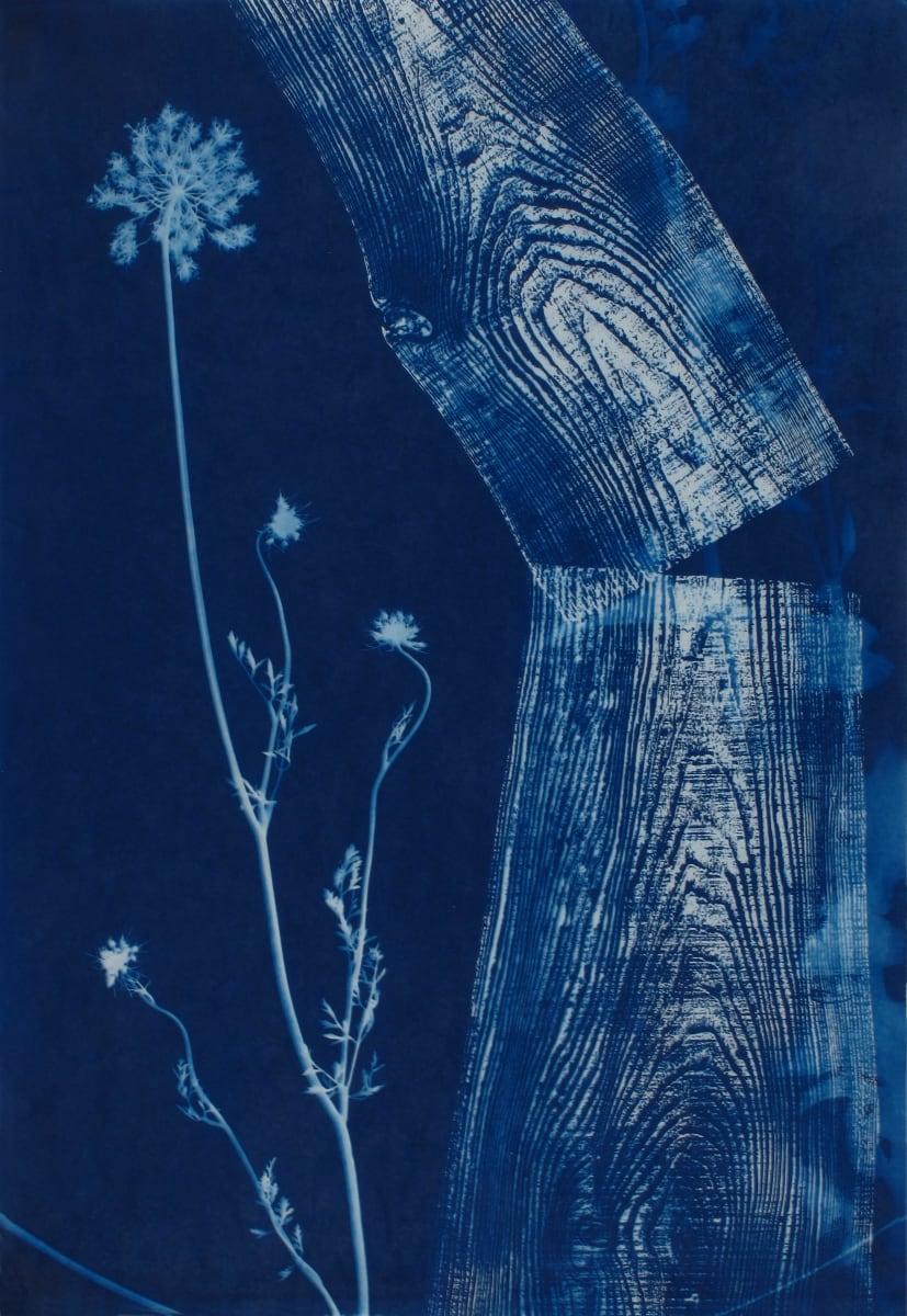 Broken Plank with Queen Anne by Bonnie Baker