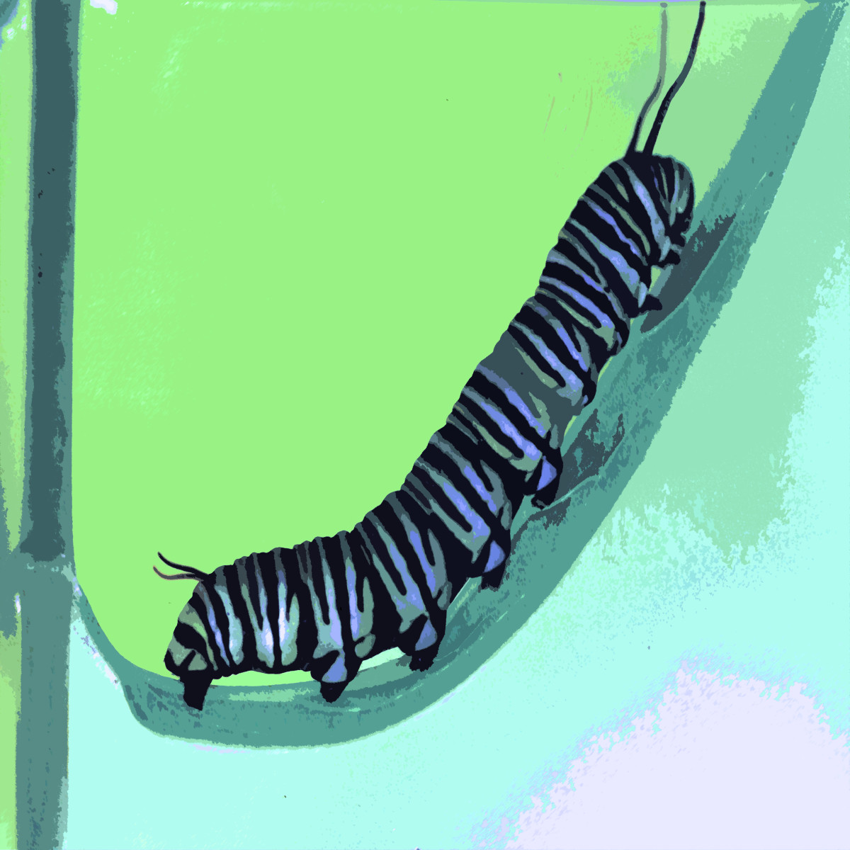 Caterpillar by Gina Godfrey