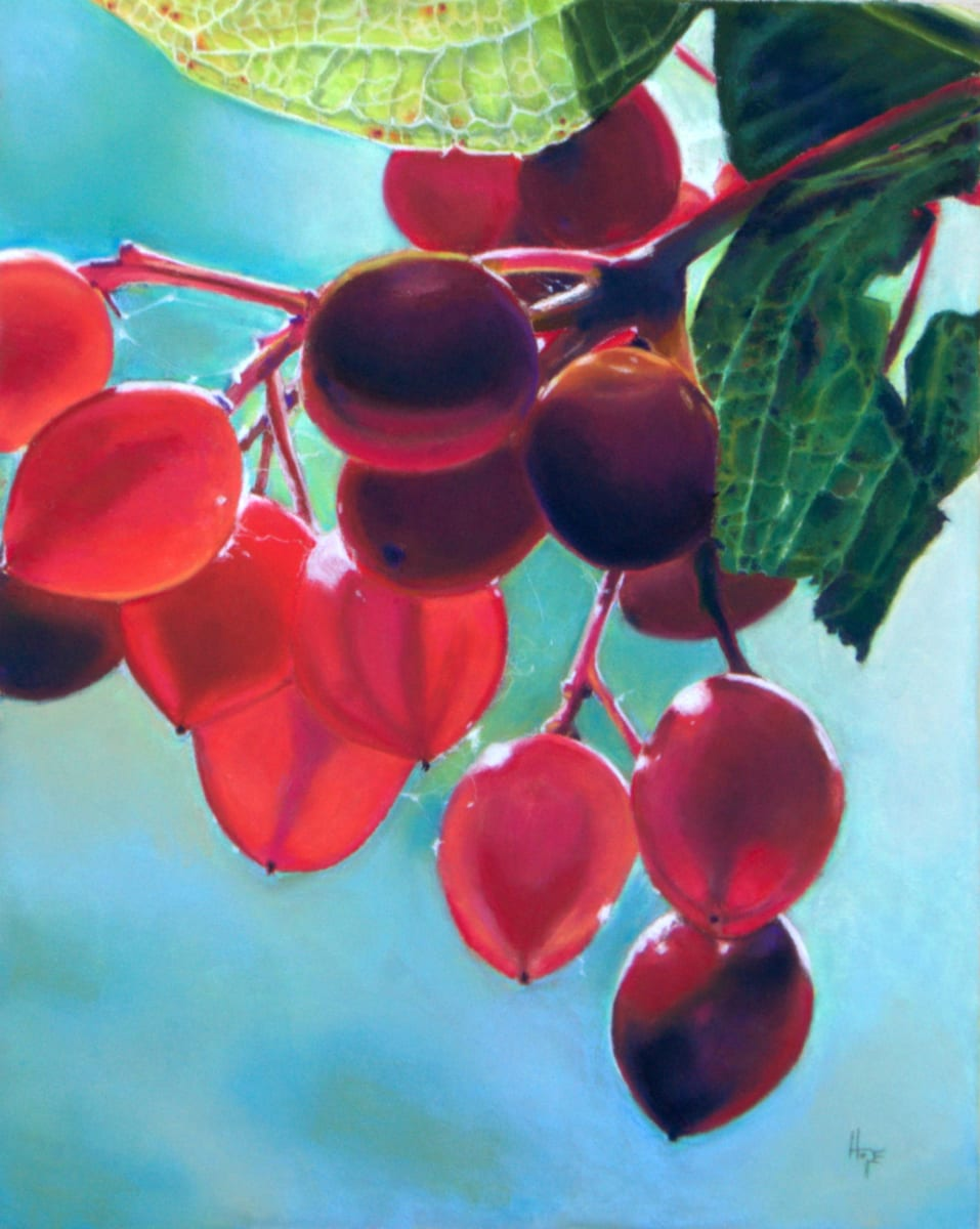 Backlit Berries by Hope Martin