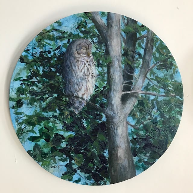 Barred Owl by Sarah Robinson